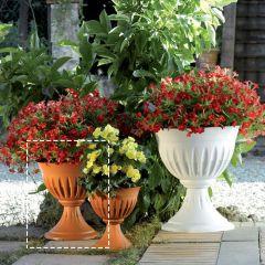 31902  Alba Flower Cup-33